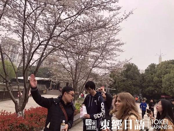 东经日语玉山公园赏樱活动-外教为学员讲解