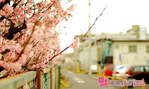日本留学-如何去日本留学-苏州日语留学班