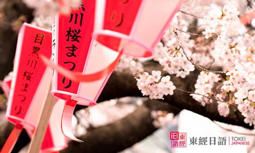日本樱花-日本留学-日本文学
