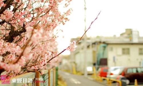日本留学-日本留学手续