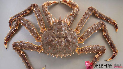 鳕场蟹-日本螃蟹-日本文化