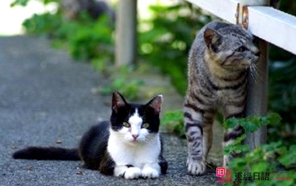 日本萌猫-苏州日语-苏州日语学习