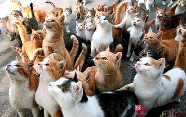 日本猫岛-苏州日语培训-苏州日语
