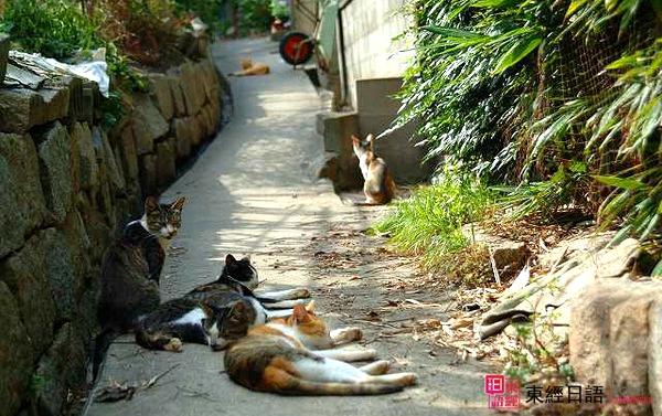 男木猫岛-苏州日语学习-苏州日语培训班