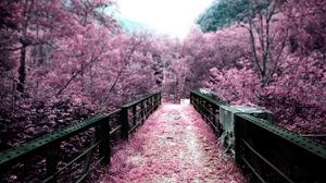 四月樱花烂漫时,日本浪漫樱花的绝景胜地盘点