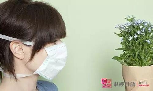 春天花粉过敏-日本人花粉易过敏的原因