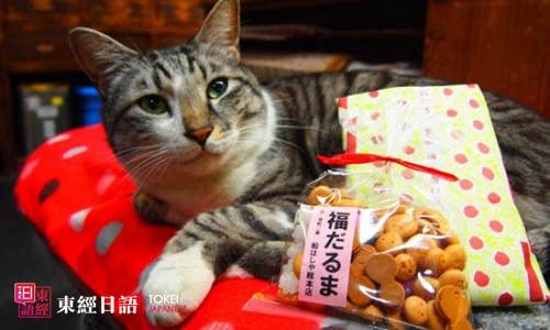 日猫咪店长人气旺