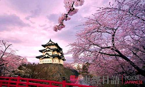 日本樱花祭