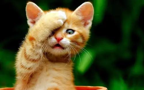 """日语中和""""猫""""有关的俗语,你全都知道吗?"""