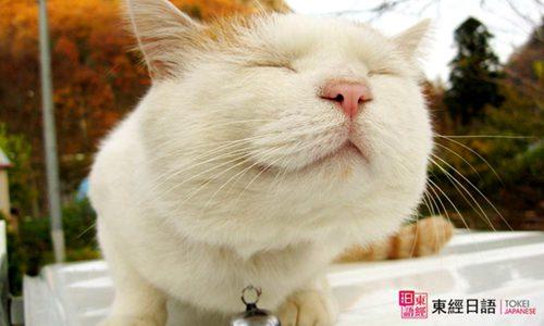 跟猫有关的日语-苏州日语培训班-苏州园区日语培训