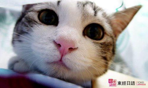 跟猫有关的日语-苏州新区日语培训-苏州日语