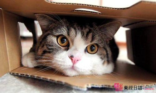 跟猫有关的日语-苏州日语培训班-苏州日语