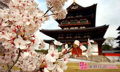 樱花-樱花的日语说法-樱花的日文说法