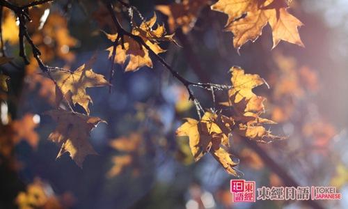 秋季日语词汇-苏州日语