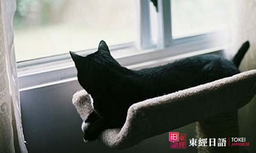 黑猫-学日文