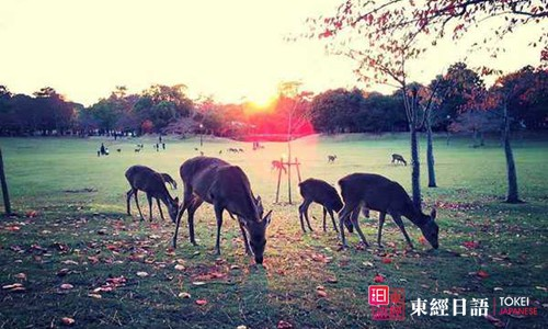 日本著名旅游景点:奈良公园