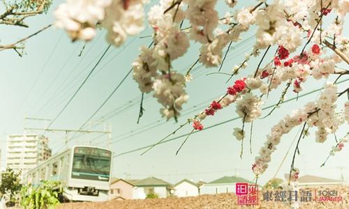 日语五十音学习-苏州日语培训