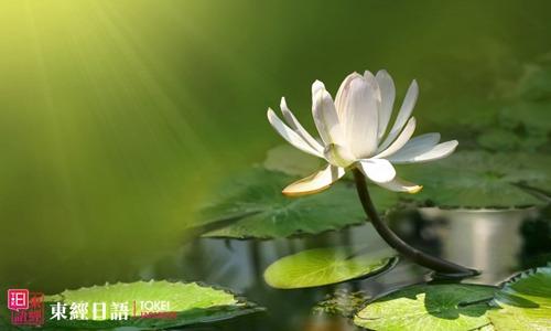 莲花日语-莲花的日语说法